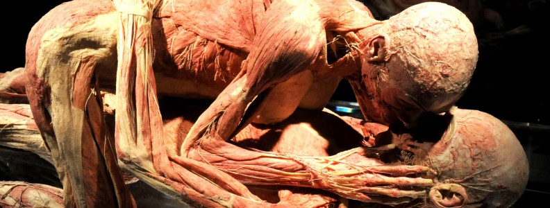 La Mostra Body Worlds ispira un costume originale per Carnevale – Anatomy Man